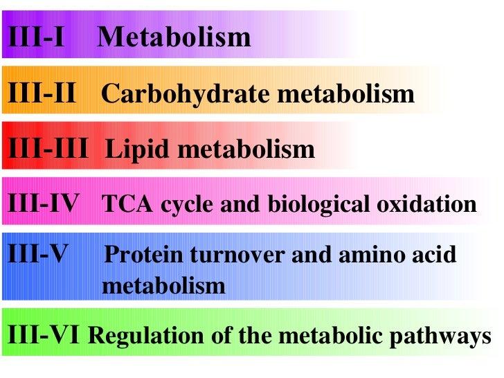 III-II  Carbohydrate metabolism III-III  Lipid metabolism III-V  Protein turnover and amino acid    metabolism III-IV  TCA...