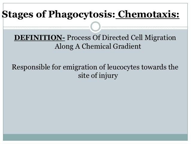 CHEMOTAXIS-MECHANISM Bind to specific receptors on leucocytes Effector molecules produced-phospholipase, tyrosinase etc...