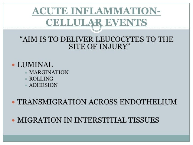 """ACUTE INFLAMMATION-        CELLULAR EVENTS """"AIM IS TO DELIVER LEUCOCYTES TO THE              SITE OF INJURY"""" LUMINAL   M..."""