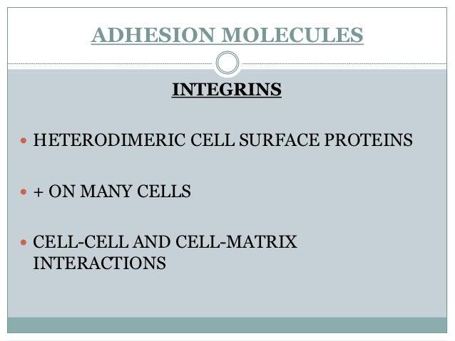 ENDOTHELILI   LEUKOCYTE MOLECULE                 ROLEAL MOLECULEGLYCAM1       L-selectin                         ROLLINGP-...