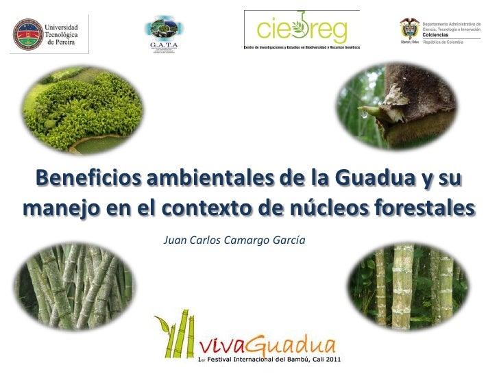 Beneficios ambientales de la Guadua y sumanejo en el contexto de núcleos forestales             Juan Carlos Camargo García