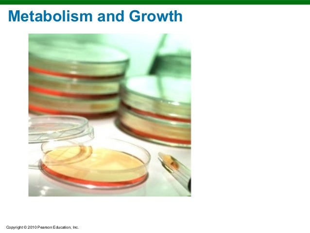Copyright © 2010 Pearson Education, Inc. Metabolism and Growth