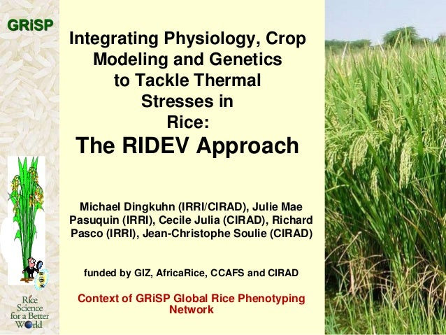 GRiSP  Integrating Physiology, Crop Modeling and Genetics to Tackle Thermal Stresses in Rice:  The RIDEV Approach Michael ...