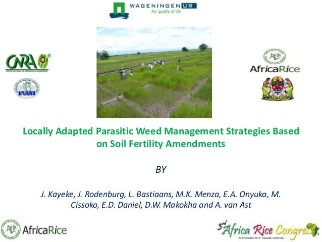 Locally Adapted Parasitic Weed Management Strategies Based on Soil Fertility Amendments BY J. Kayeke, J. Rodenburg, L. Bas...