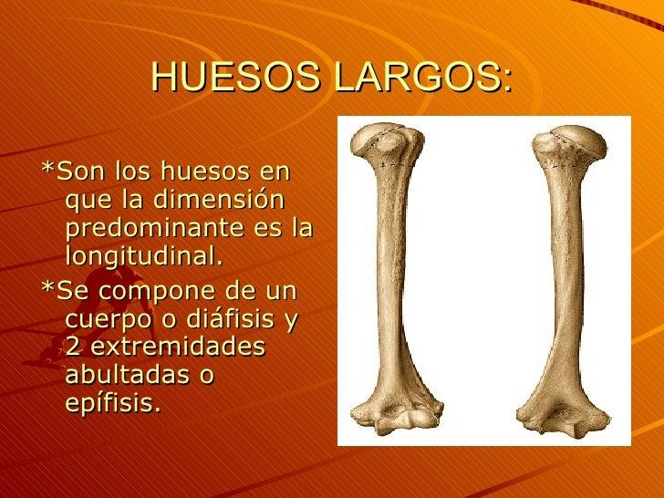 2 OsteologíA