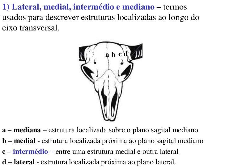 Aula 2 Anatomia Planos E Eixos