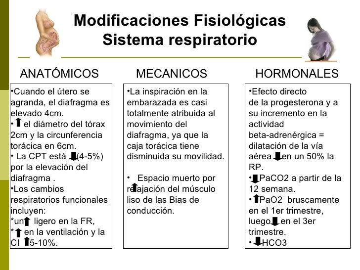 Modificaciones Fisiológicas Sistema respiratorio ANATÓMICOS <ul><li>Cuando el útero se agranda, el diafragma es elevado 4c...