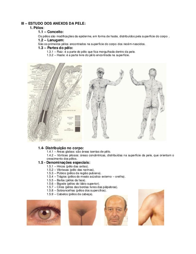 III – ESTUDO DOS ANEXOS DA PELE:       1. Pêlos:            1.1 – Conceito:        Os pêlos são modificações da epiderme, ...