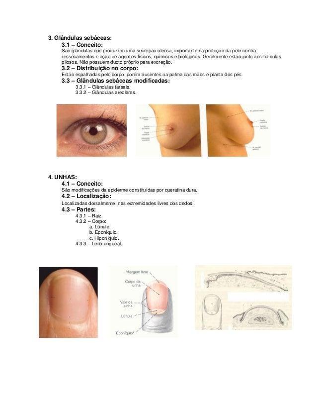 3. Glândulas sebáceas:     3.1 – Conceito:     São glândulas que produzem uma secreção oleosa, importante na proteção da p...
