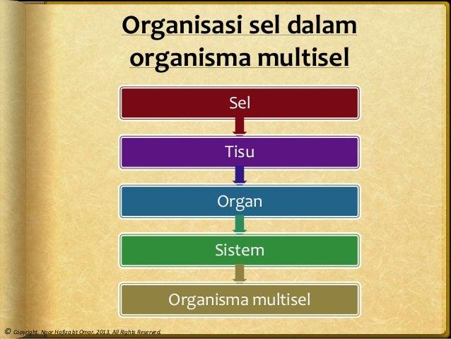 Bab 2 Struktur sel dan organisasi sel
