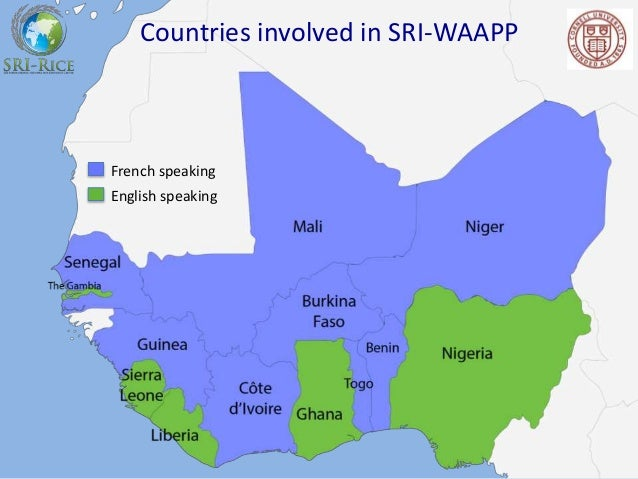 Improving and Scaling Up SRI in West Africa Insights from a regional