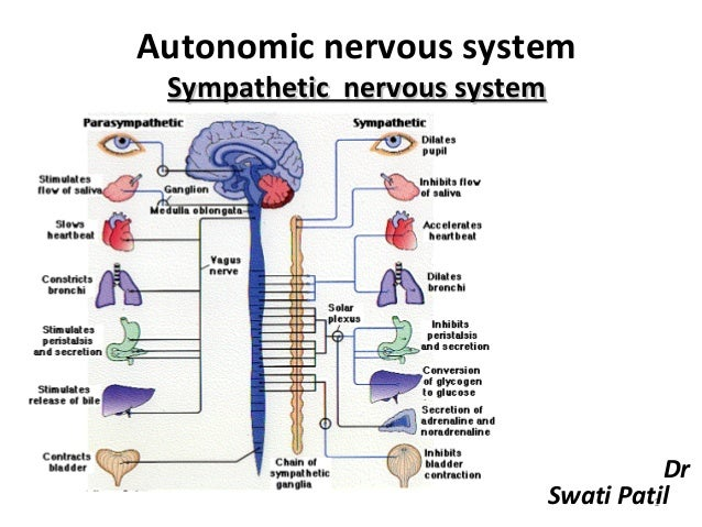 2. sympathetic nervous system
