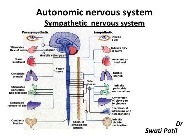 Autonomic nervous system Sympathetic nervous system                                         Dr                            ...