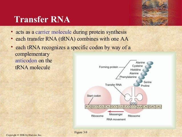 the biological description of proteins and its function An interactive learning environment for students and parents in my ap biology class wednesday, november 21, 2007 theme 5: relationship of structure & function theme 5: relationship of structure protein structure determines its function proteins consist of long chains of amino acids.