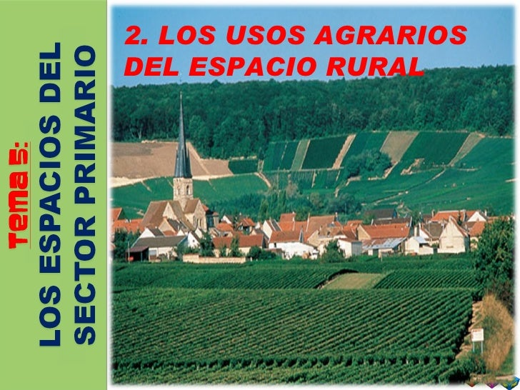 2. LOS USOS AGRARIOS DEL ESPACIO RURAL