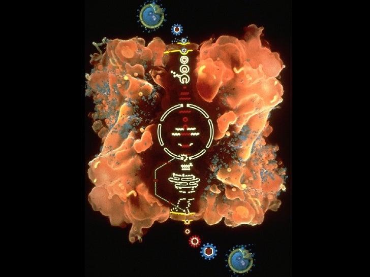 Vih sida for Piscina hongos genitales