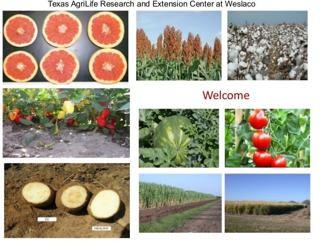 Welcome Texas AgriLife Research and Extension Center at Weslaco