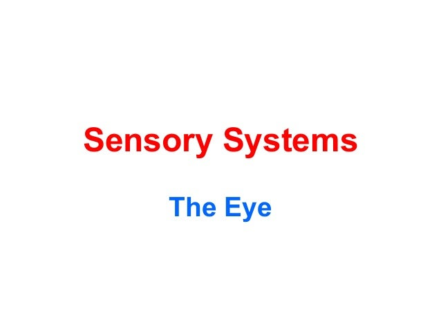 Sensory Systems The Eye