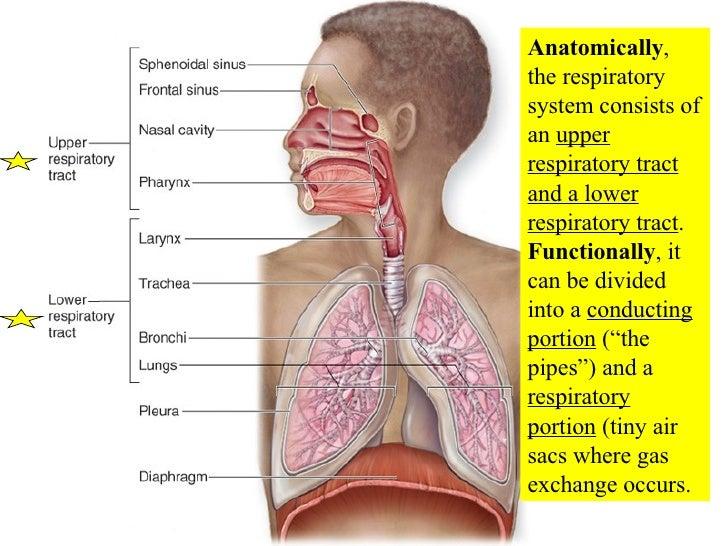 20 Respiratory System