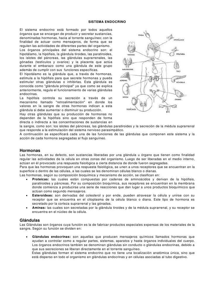 20 sistema endocrino