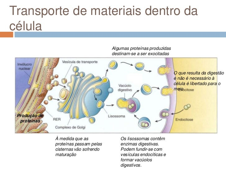 Transporte de materiais dentro dacélula                                        Algumas proteínas produzidas               ...
