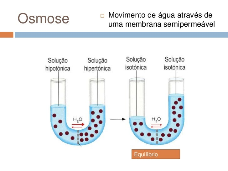 Movimento de água através deOsmose                uma membrana semipermeável                   Equilíbrio                ...