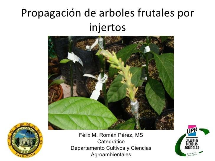 Propagación de arboles frutales por injertos Félix M. Román Pérez, MS Catedrático Departamento Cultivos y Ciencias Agroamb...