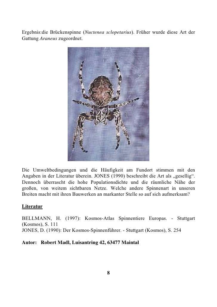 Ergebnis:die Brückenspinne (Nuctenea sclopetarius). Früher wurde diese Art der Gattung Araneus zugeordnet.     Die Umweltb...