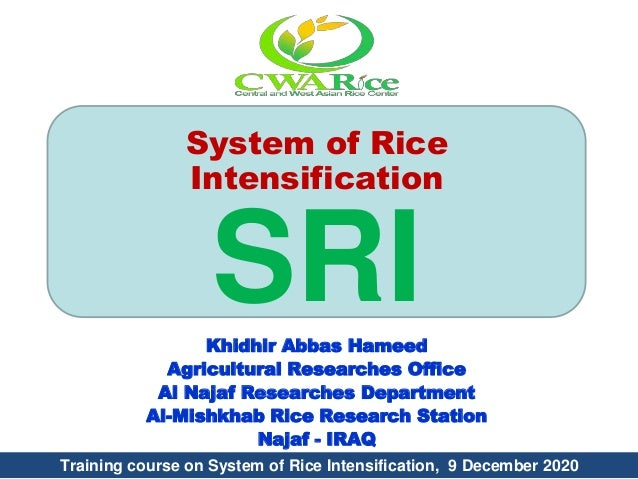 System of Rice Intensification SRIKhidhir Abbas Hameed Agricultural Researches Office Al Najaf Researches Department Al-Mi...