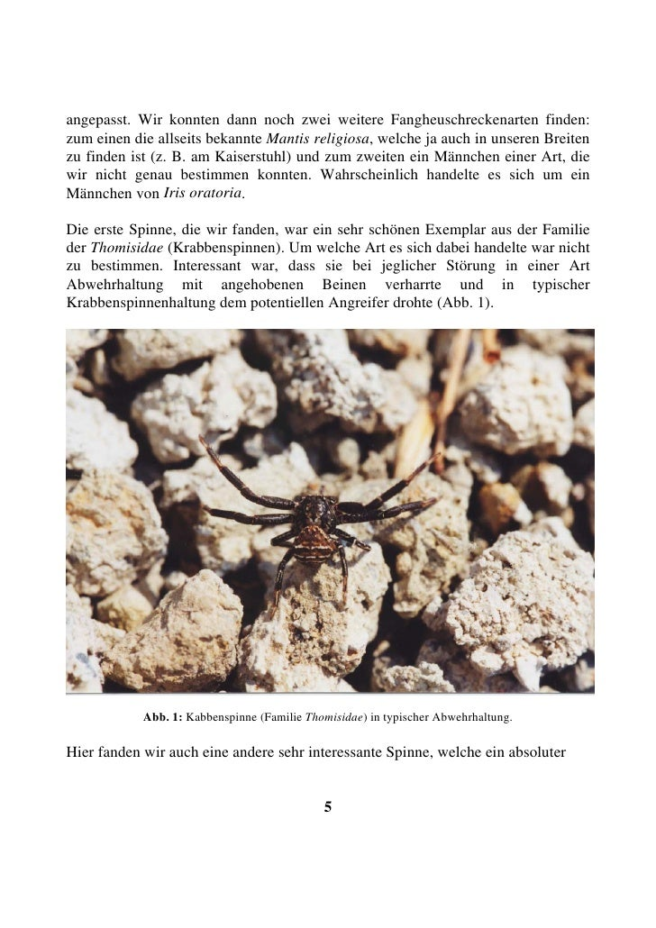 angepasst. Wir konnten dann noch zwei weitere Fangheuschreckenarten finden: zum einen die allseits bekannte Mantis religio...
