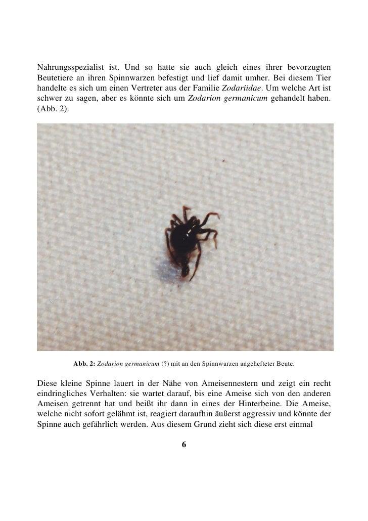 Nahrungsspezialist ist. Und so hatte sie auch gleich eines ihrer bevorzugten Beutetiere an ihren Spinnwarzen befestigt und...