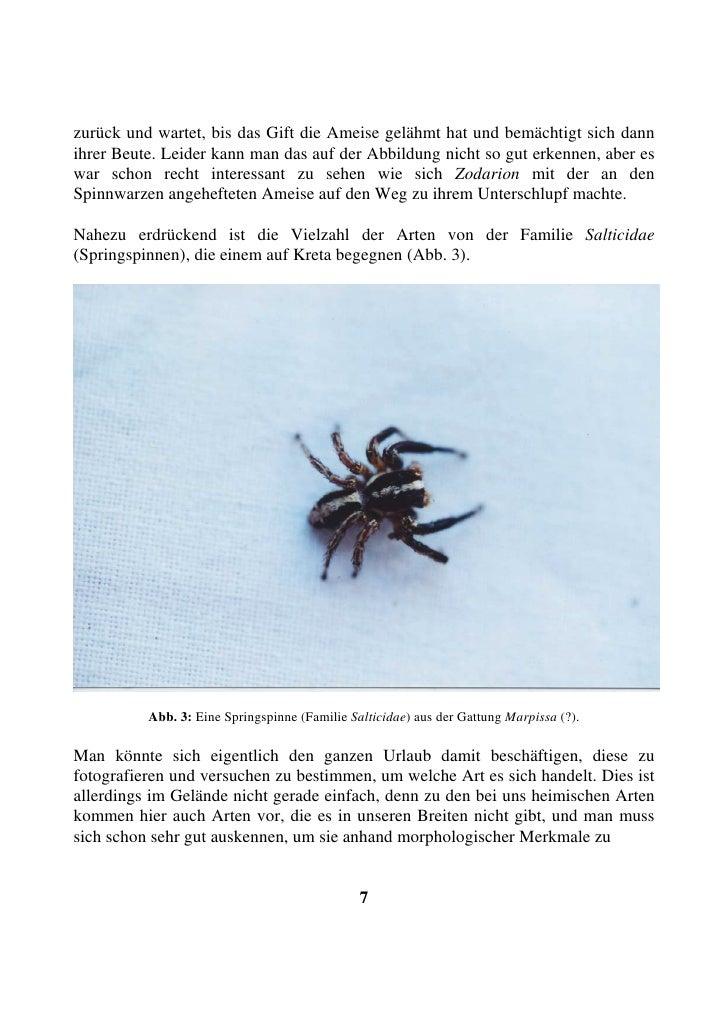 zurück und wartet, bis das Gift die Ameise gelähmt hat und bemächtigt sich dann ihrer Beute. Leider kann man das auf der A...