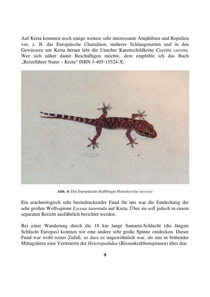Auf Kreta kommen noch einige weitere sehr interessante Amphibien und Reptilien vor, z. B. das Europäische Chamälion, mehre...