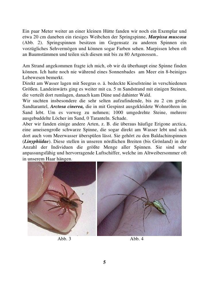 Ein paar Meter weiter an einer kleinen Hütte fanden wir noch ein Exemplar und etwa 20 cm daneben ein riesiges Weibchen der...