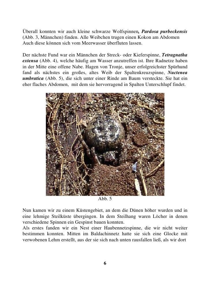 Überall konnten wir auch kleine schwarze Wolfspinnen, Pardosa purbeckensis (Abb. 3, Männchen) finden. Alle Weibchen trugen...