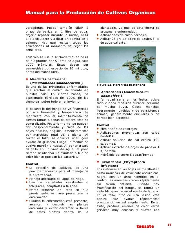 2003 fiagro manual de producci n de tomate org nico for Bomba manual para pintar con cal