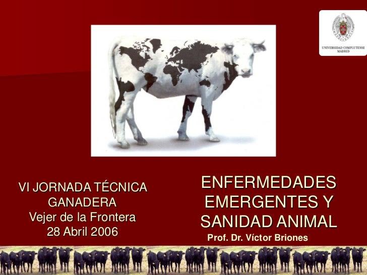 VI JORNADA TÉCNICA       ENFERMEDADES     GANADERA            EMERGENTES Y  Vejer de la Frontera                         S...