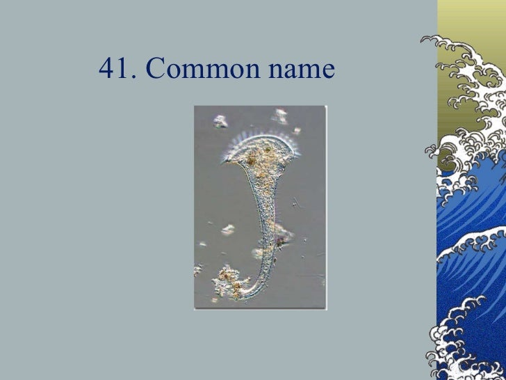 41. Common name