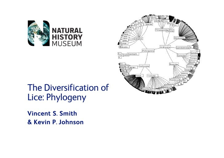 The Diversification of Lice: Phylogeny Vincent S. Smith  Kevin P. Johnson