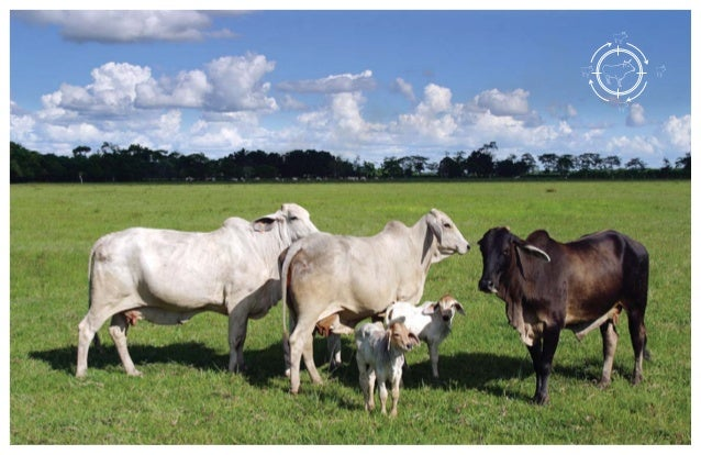 La siembra de leguminosas en el establecimiento o mejoramiento de praderas, ha demostrado sus bondades en el suelo, la pla...