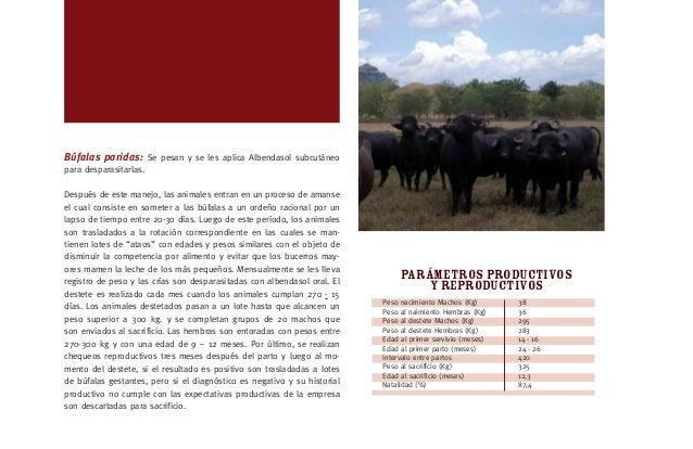 [27] ESTACION UNO ·PARÁMETROS TECNICOS La Hacienda Buenos Aires esta ubicada en la Vereda San Juan Municipio Mariquita, To...