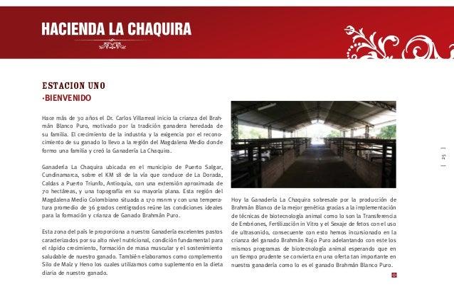 [31] ESTACION UNO ·BIENVENIDA La empresa HACIENDA DEL RIO S.A., propietaria Hacienda Las Camelias, la cual se encuentra ub...