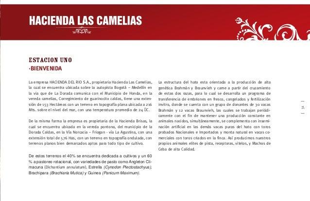 [39] ESTACIÓN DOS ·GANADO PURO El Brahmán Rojo es una raza Cebuina resultado del cruzamiento de varias razas entre ellas e...