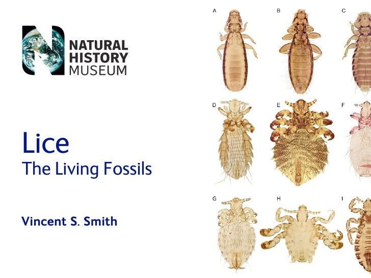 Lice The Living Fossils  Vincent S. Smith