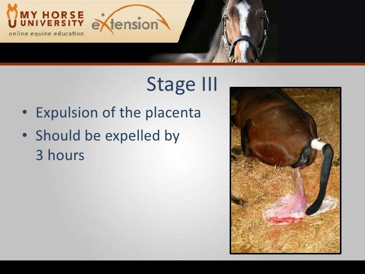 2008 12 Anderson The Foaling Process