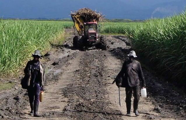 [7] Nuestro territorio El departamento del Valle del Cauca está localizado en el surocci- dente de Colombia, entre la cord...
