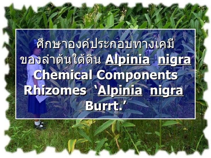 ศึกษาองค์ประกอบทางเคมี ของลำต้นใต้ดิน  Alpinia   nigra  Chemical Components Rhizomes  ' Alpinia   nigra   Burrt.'