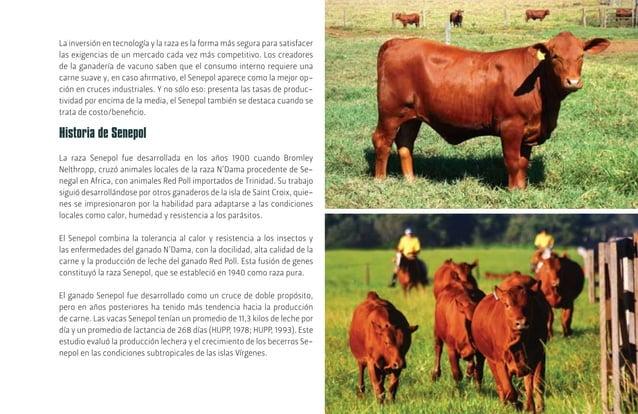[19] La Empresa Brasileira de Pesquisa Agropecuária (Embrapa), vinculada al Ministerio de Agricultura, Ganadería y Abastec...
