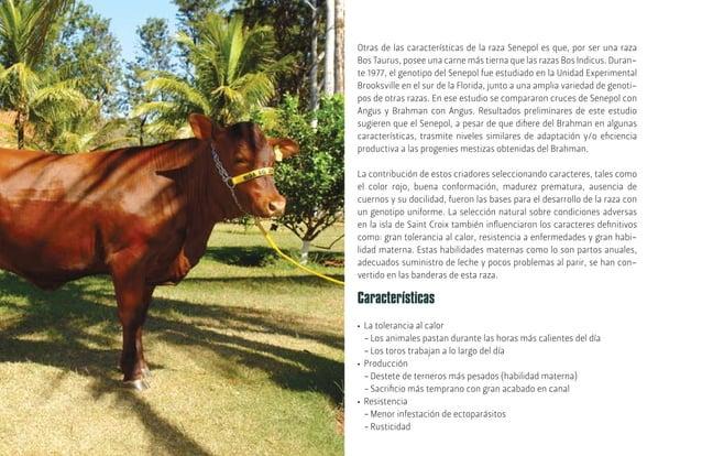 [20] LocalizadaenCampoGrande,MatoGrossodoSul,EmbrapaGanadodeCarne tiene su sede en un área de 3.081 hectáreas, a 15 kilóme...