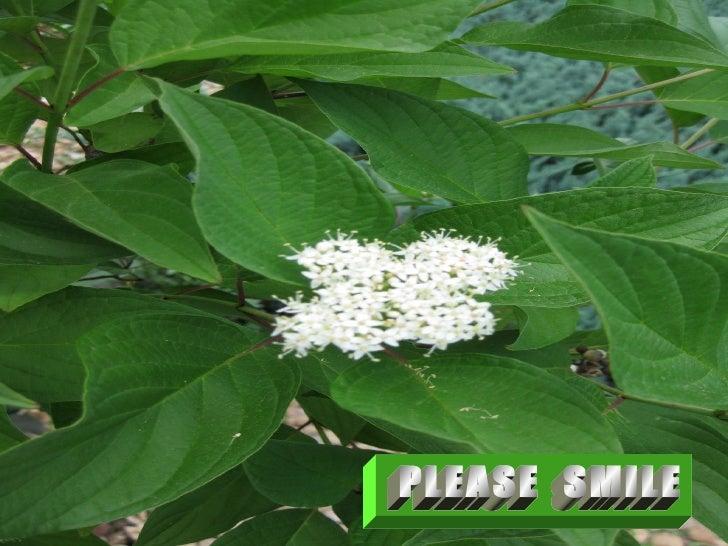 PLEASE  SMILE